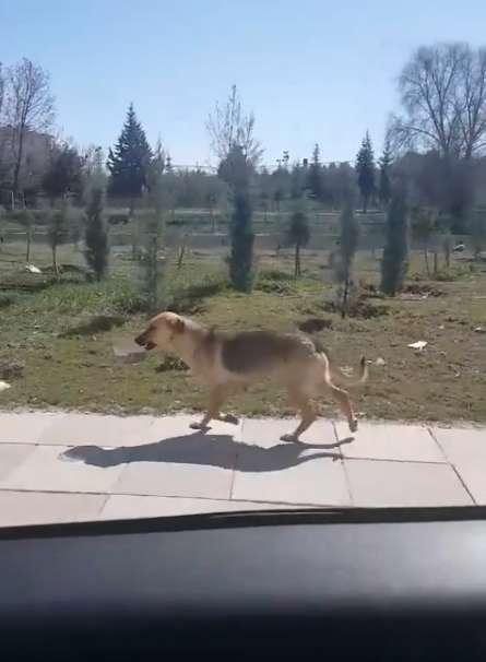 Đi theo cô chó hoang ngậm bát thức ăn, nhà cứu hộ bất ngờ khi biết nhiệm vụ cô đang thực hiện