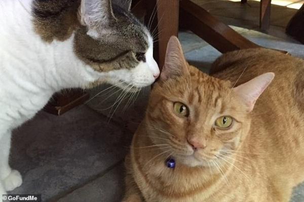 'Sen' của thế kỷ: Quyên góp tiền để phóng tro cốt của mèo cưng lên quỹ đạo Trái Đất