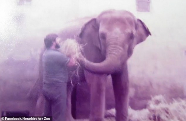 Xúc động khoảnh khắc chú voi gặp lại và nhận ra ngay người đã chăm sóc mình 32 năm về trước