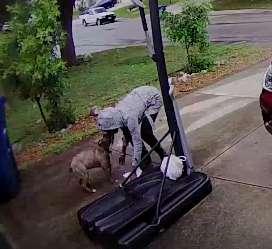 Đau lòng khoảnh khắc chú chó pitbull tuyệt vọng níu kéo người chủ bỏ rơi mình