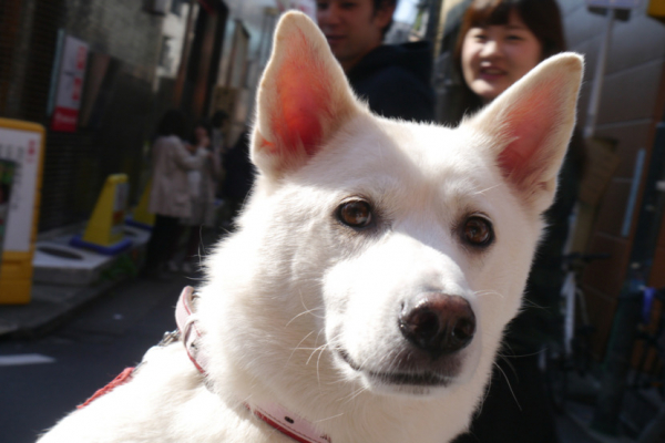 Giữa dòng đời tấp nập, cô gái bắt gặp chú chó có đôi mắt buồn như... mắt người yêu cũ