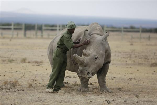 Liên Hiệp Quốc: Cuộc Đại Tuyệt Chủng thứ 6 sẽ xảy ra, hơn một triệu loài có thể bị hủy diệt