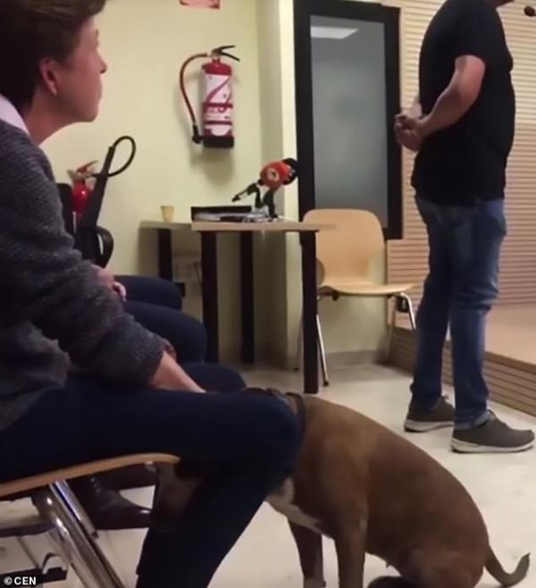 Thẩm phán cho gọi một chú chó Pit Bull đứng ra làm chứng tố cáo người chủ ngược đãi mình