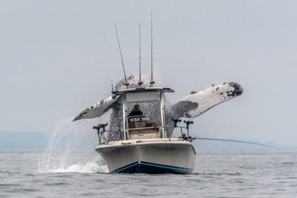 Khoảnh khắc cá voi lưng gù nhảy khỏi mặt biển bên cạnh thuyền đánh cá cho thấy con người nhỏ bé đến nhường nào