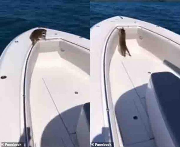Luật sư Mỹ bị chỉ trích vì để mặc gấu mèo chết đuối ở ngoài biển