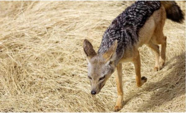 10 loài động vật 'ở dơ' nhất thế giới