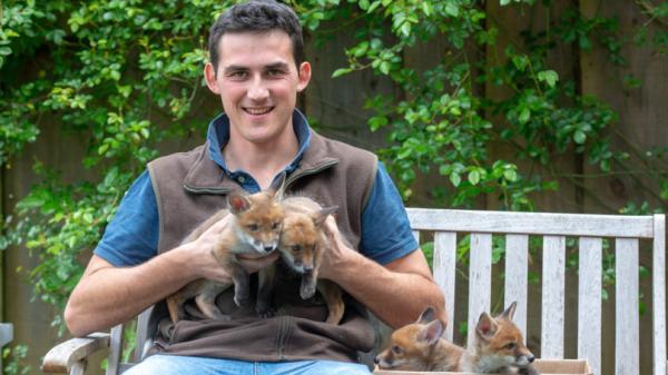 Nông dân nhanh trí phẫu thuật lấy thai, cứu 4 chú cáo con trong bụng cáo mẹ đã chết