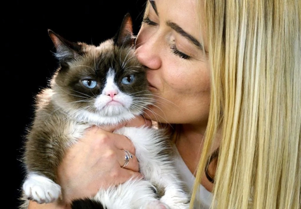 Cô mèo cau có Grumpy nổi tiếng thế giới đã qua đời vì mắc bệnh nặng