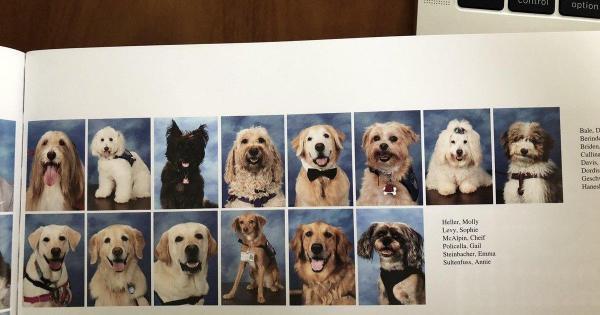 Những chú chó đáng yêu hỗ trợ tâm lý học sinh cũng được vinh danh trong kỉ yếu của trường