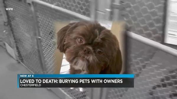 Chú chó đang khoẻ mạnh thì bị an tử vì chủ nhân muốn nó được chôn cất cùng mình