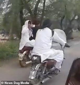 Chỉ có tại Pakistan: Lấy xe máy chở bò cưng đi hóng mát