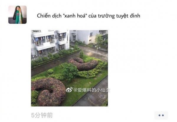 Chiến dịch trồng cây xanh của trường học Trung Quốc khiến nhiều người cười ra nước mắt