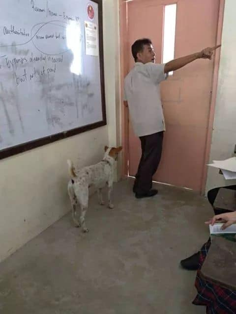 Đáng thương chú chó nhỏ đợi chờ người bạn không bao giờ có thể trở về
