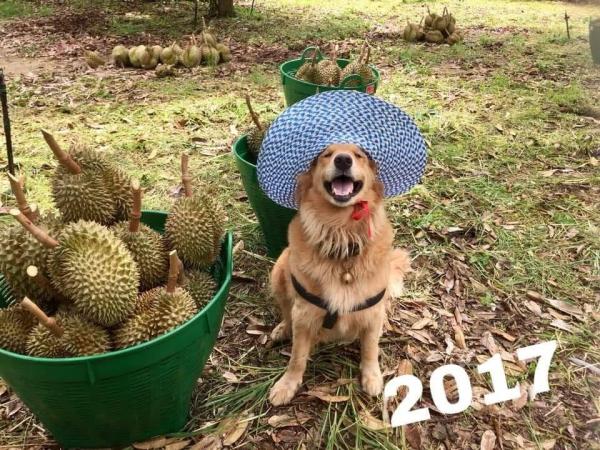 Jubjib - Em chó 'gâu đần' bán sầu riêng nuôi chủ ai thấy cũng muốn mua ủng hộ