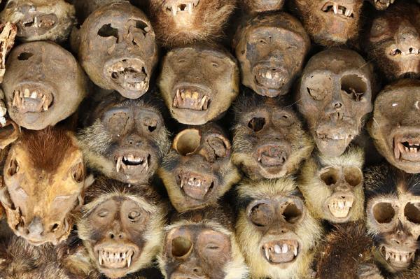 8 điểm đến 'lạnh sống lưng' trên toàn thế giới: Chùa Chuột, Ấn Độ, đảo búp bê, Mexico
