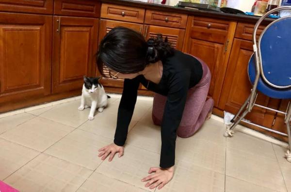 Cười đau bụng với cảnh chú mèo đua đòi tập yoga theo chủ và lại còn tập rất chuẩn