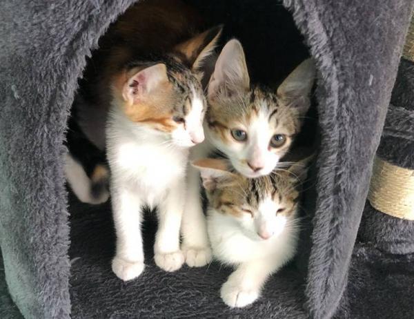 Bạn có thể tìm em mèo đi lạc của mình bằng cách hỏi thăm những chú mèo khác?