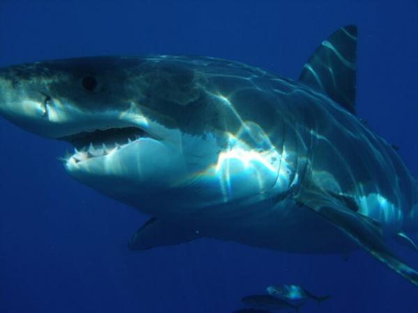 Người cha anh hùng đấm vào mặt cá mập 5 lần để giải cứu con gái mình