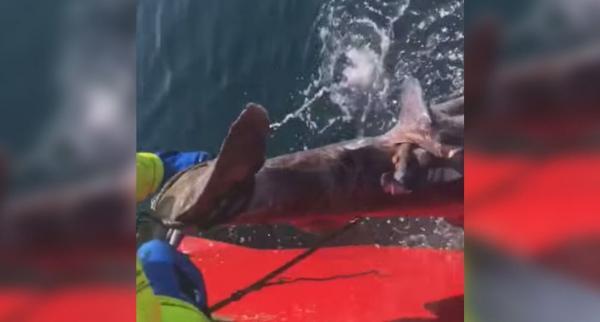 Jason Momoa lên án cực gay gắt các ngư dân độc ác cắt đuôi cá mập rồi quăng xuống biển