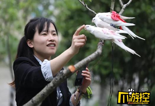 Ý tưởng khởi nghiệp: Kiếm gần một trăm triệu mỗi tháng chỉ nhờ làm... tã giấy cho chim
