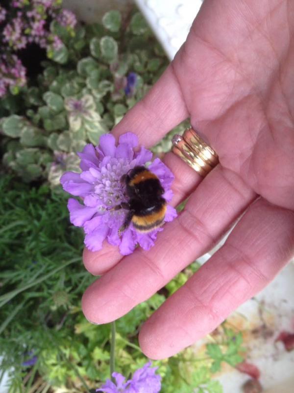 Chuyện lạ có thật: Người phụ nữ xây riêng một khu vườn cho cô bạn... ong