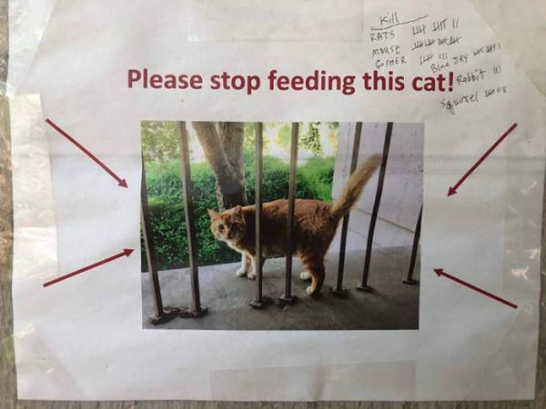Sinh viên phải dán thông báo ngăn mọi người cho chú mèo sống trong trường ăn vì nó đã quá béo phì