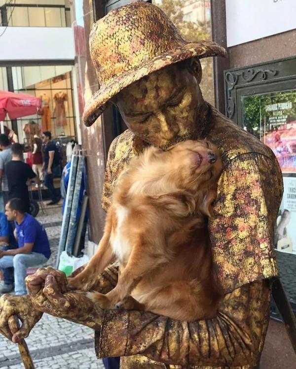 Jaspe - Nàng chó nâu có khả năng biểu diễn nghệ thuật tượng sống cùng chủ