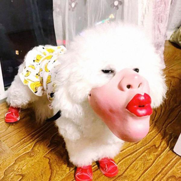 Mặt nạ hình người dành cho chó: Hài hước nhưng liệu có phù hợp?