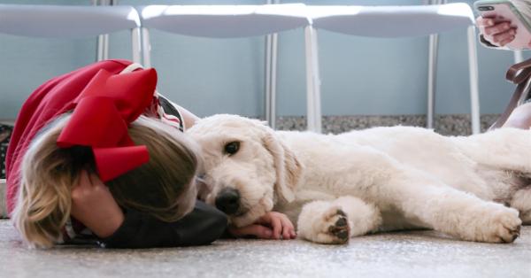 Netflix đang tìm kiếm dàn diễn viên... cún cho bộ phim tài liệu về 'những người bạn bốn chân'