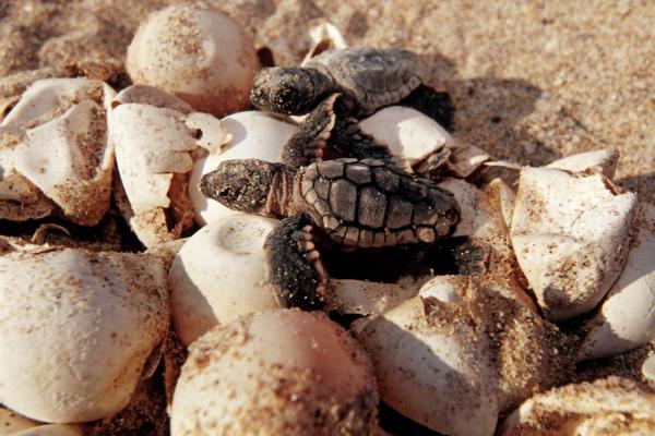 Cô gái Trung Quốc bị cảnh sát bắt giữ vì cố ý giẫm chân lên tổ rùa biển ở Miami