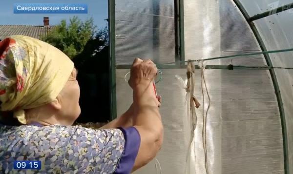 Ngôi làng ở Nga ăn ngủ không yên vì bị bầy ruồi khổng lồ xâm chiếm mọi ngóc ngách