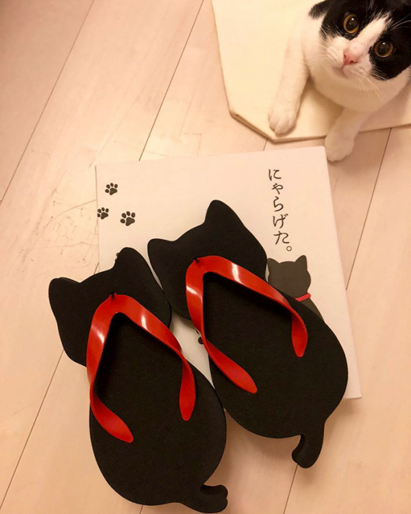Dép hình mèo đến từ Nhật Bản khiến cả thế giới 'săn lùng' vì quá đáng yêu