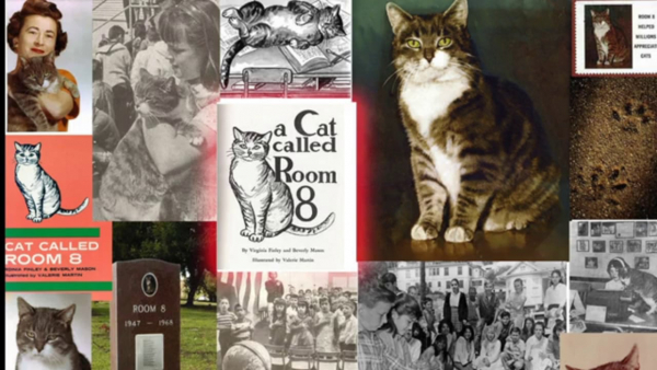 Những 'thánh mèo' nổi tiếng trong lịch sử không kém cạnh loài người