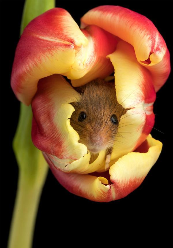 Chán rình mò hooman ở góc tường, giờ thằn lằn chỉ muốn hóa thân thành nàng tiên để... ngủ trong hoa