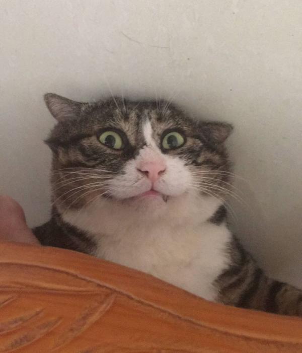 Hóa ra, mèo không ghét con người như chúng ta tưởng!