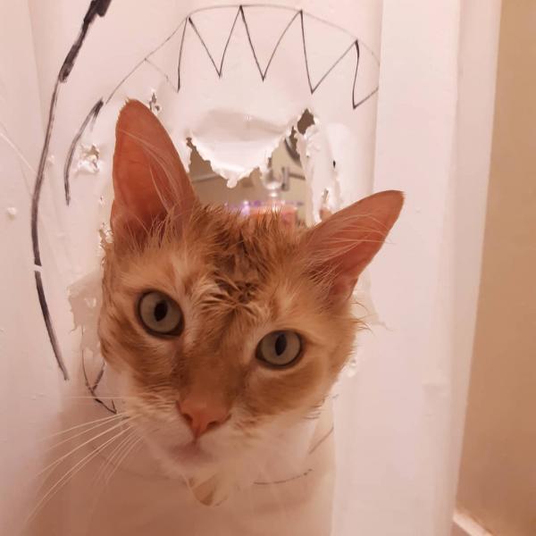 Bất lực trước sự phá phách của 'boss', cô gái vẽ đủ các hình trên tấm che bồn tắm bị mèo cào rách bươm