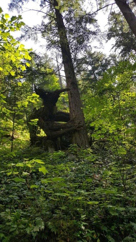 Thám hiểm rừng sâu, mọi người ngỡ ngàng khi phát hiện ra bao điều thú vị