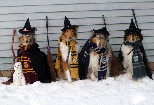 Nay, ngay cả những chú chó cũng có khả năng gia nhập các nhà trong Hogwarts