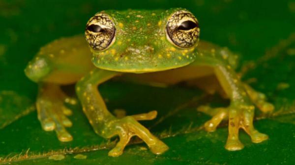 Hàng trăm sinh vật tưởng 'tuyệt chủng' lại xuất hiện tại 'Thành Phố trắng Của Thần Khỉ' Honduras