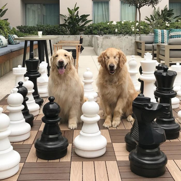 Câu chuyện ấm lòng về một chú chó 'Gâu đần' khiếm thị và người bạn dẫn đường