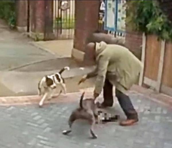 Người chủ quỳ xuống xin lỗi sau khi hai con chó của mình xé xác mèo nhà hàng xóm