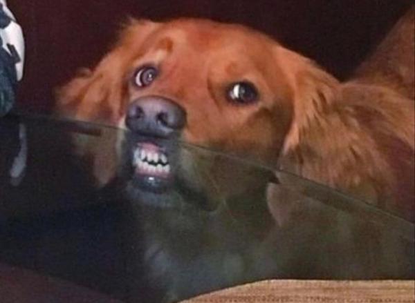 23 bức ảnh 'cuồng loạn' cho thấy 'bộ mặt thật' của thú cưng