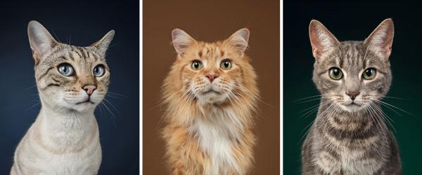 Những bức hình chứng minh loài mèo có tố chất chụp ảnh của một 'siêu sao'