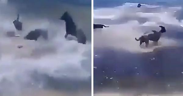 Cá mập tấn công chú chó ngơ ngác trên bãi biển và cái kết 'tuy tao yếu nhưng anh em tao đông'