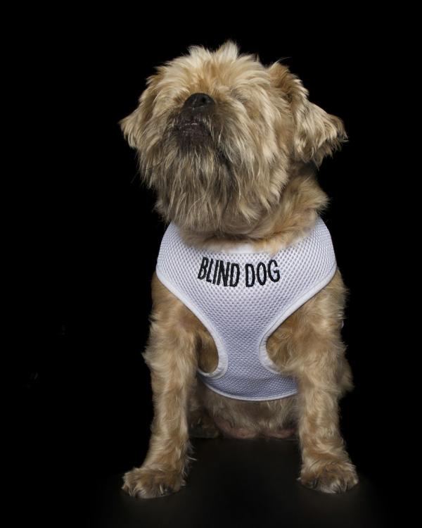 Bộ ảnh về những chú chó khuyết tật: Vẻ đẹp của sự không hoàn hảo khiến tim ta thắt lại