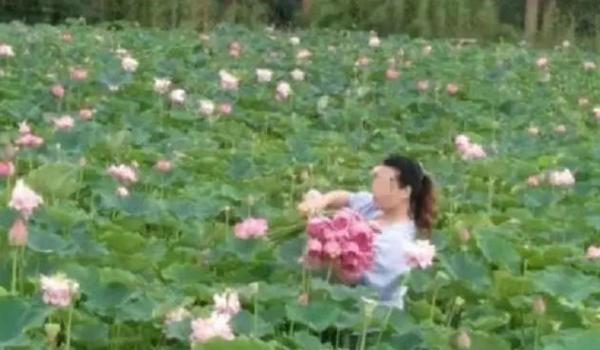 Công viên sinh thái Trung Quốc buộc phải đóng cửa sau khi bị khách du lịch hái hết hoa sen