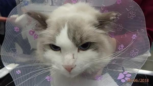 Nam thanh niên độc ác thừa nhận ném mèo của bạn gái vào thùng rác vì ghen tuông