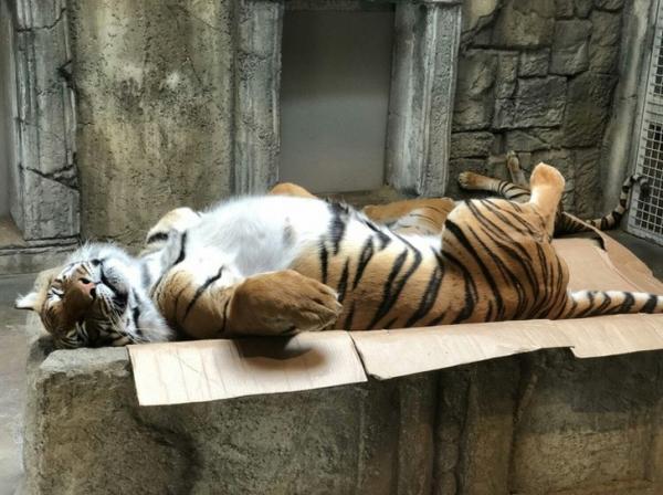 Hãy nhìn chỗ động vật ngủ, bạn sẽ đoán ra được tính cách ẩn của chúng