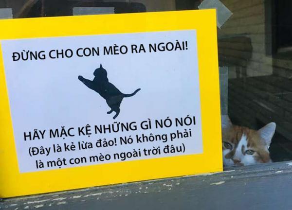 'Sen' phải để bảng cảnh báo không thả mèo vì 'boss' quá láu cá thích lừa người khác để đi chơi