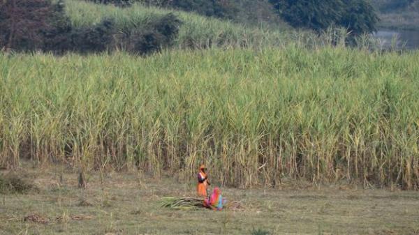 Phụ nữ nghèo ở Ấn Độ cắt bỏ tử cung để không có kinh nguyệt nữa